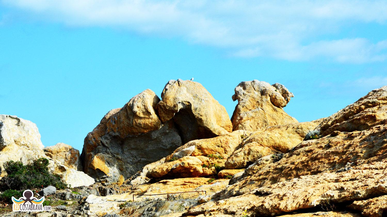Pla de Tudela - El camello
