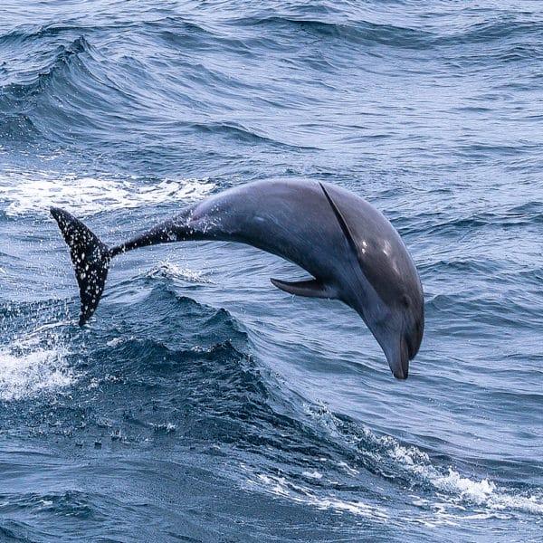 Dofins de Tramuntana, proyecto de conservación de cetáceos