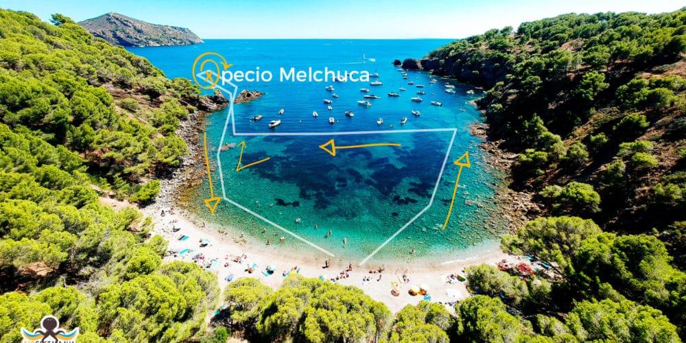 Ruta snorkel en cala Rustella y el pecio Melchuca